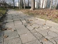 Rusza wycinka drzew, które zagrażają pieszym